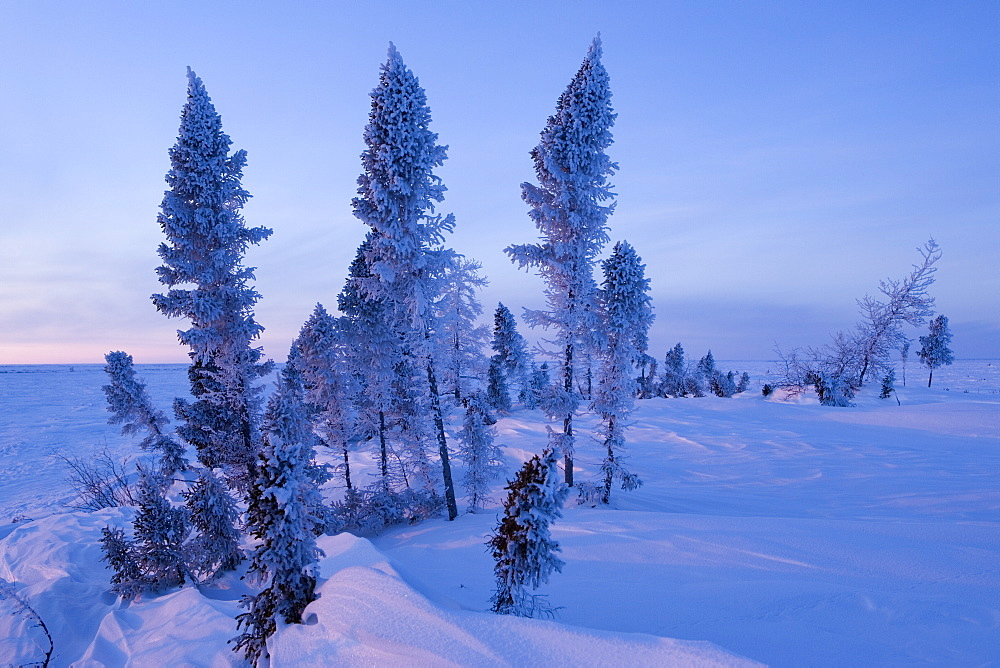 Winter Scenery, Churchill, Manitoba, Canada - 748-155