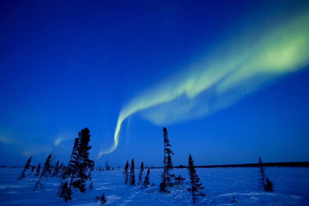 Northern Light, Aurora Borealis, Churchill, Manitoba, Canada - 748-21