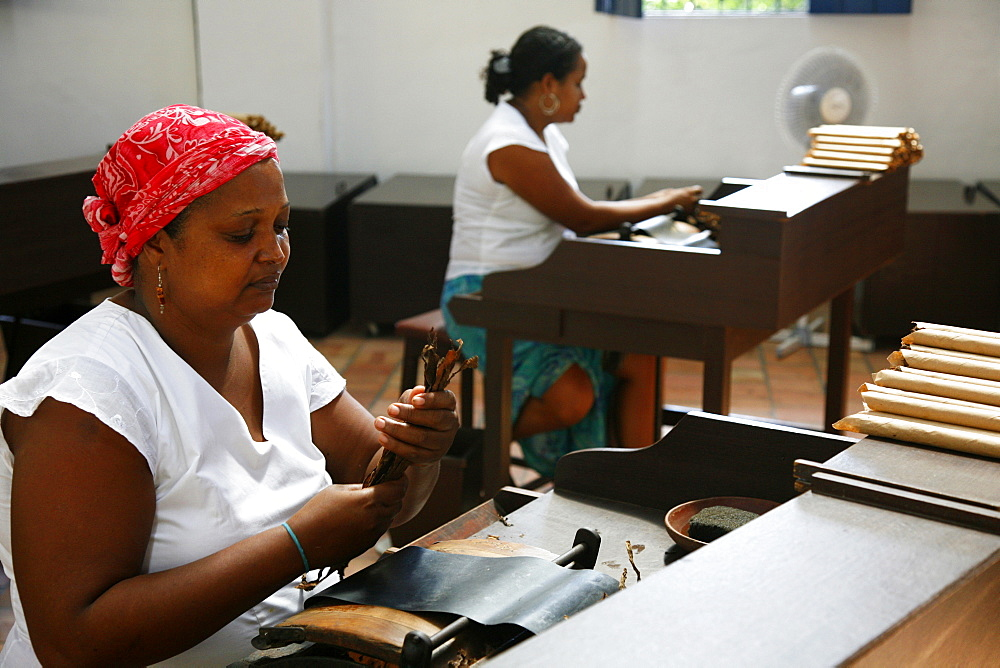 Women making cigars at the Dannemann factory in Sao Felix, Bahia, Brazil, South America