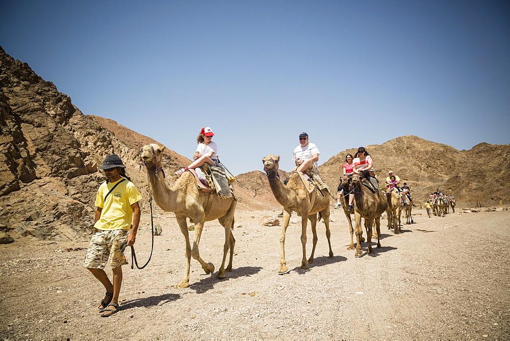 Camel safari in the desert, Eilat, Negev region, Israel, Middle East