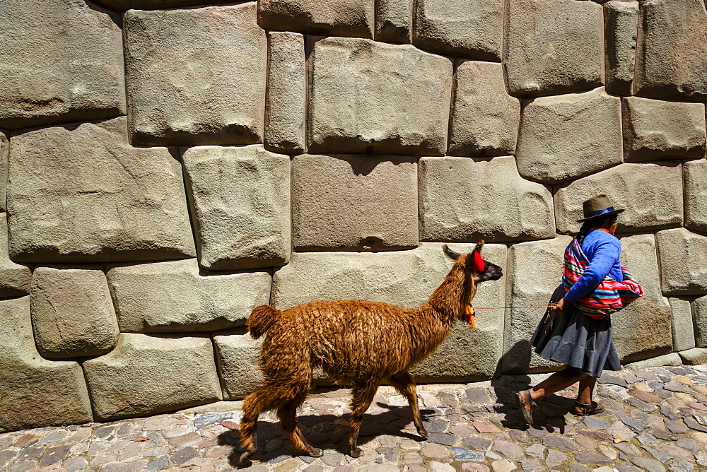 Woman with llama walking along the Inca wall at Hathunrumiyoq Street, Las Piedras del los 12 Angulos (Stone of 12 angles), Cuzco, UNESCO World Heritage Site, Peru, South America
