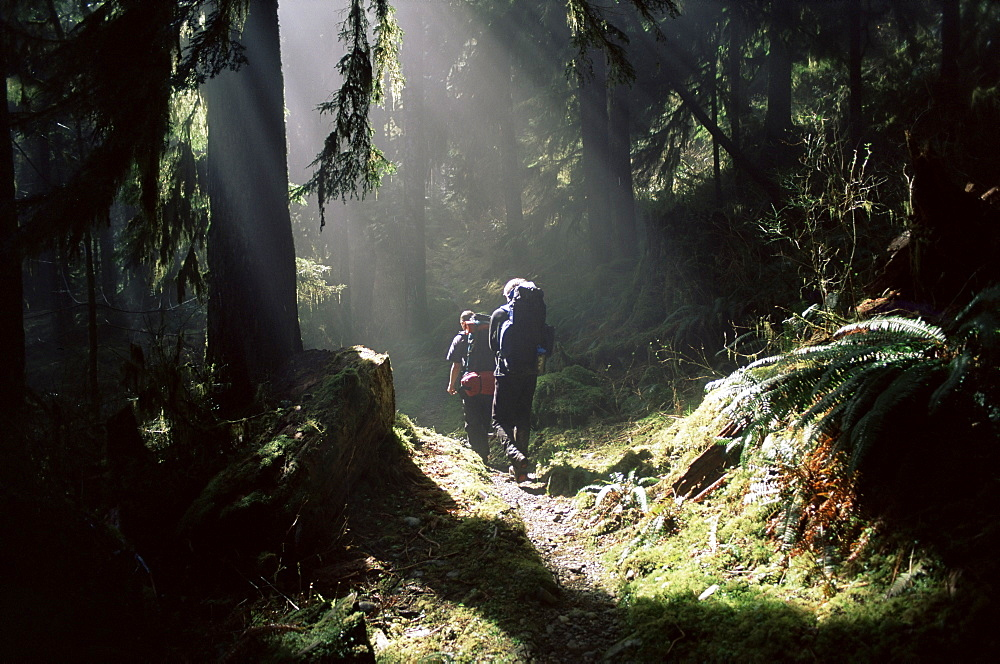Backpackers in steamy light, Queets Vall, Olympic National Park, UNESCO World Heritage Site, Washington State, United States of America (U.S.A.), North America