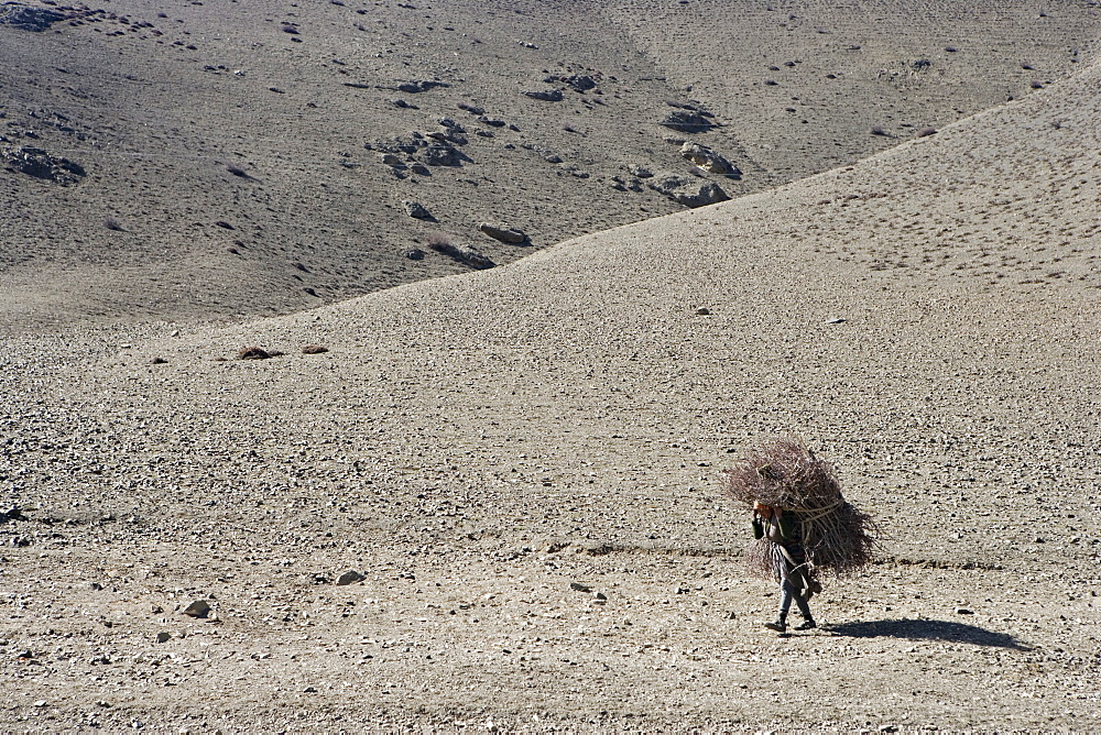 Woman carrying firewood, on the Annapurna circuit trek just west of Jharkot. Easter 2005, Nepal, Asia