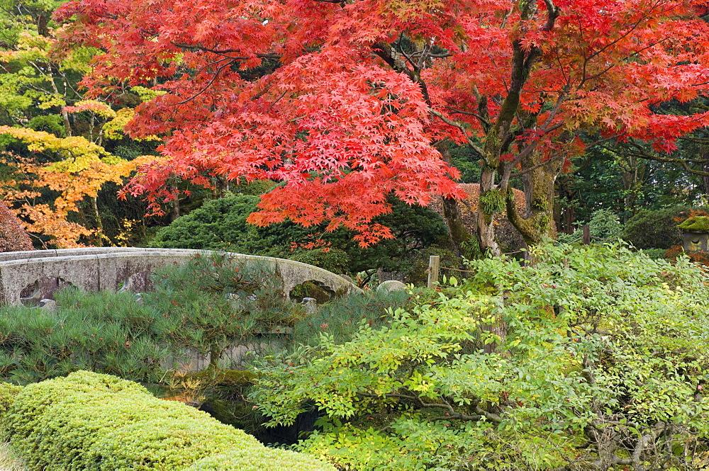 Shojo-en Zen Garden, Nikko, Central Honshu (Chubu), Japan, Asia - 756-1062