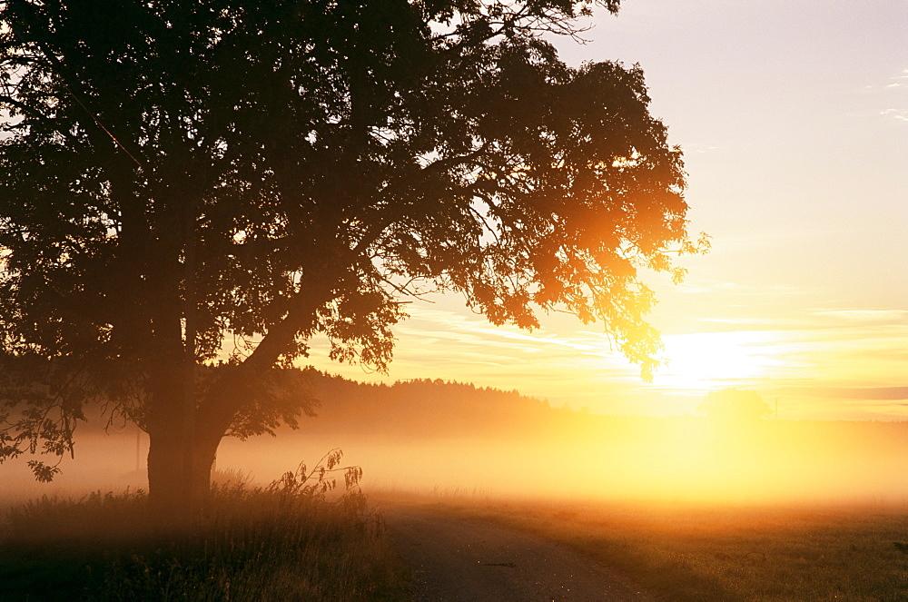 Tree and morning fog, Bavaria, Germany, Europe