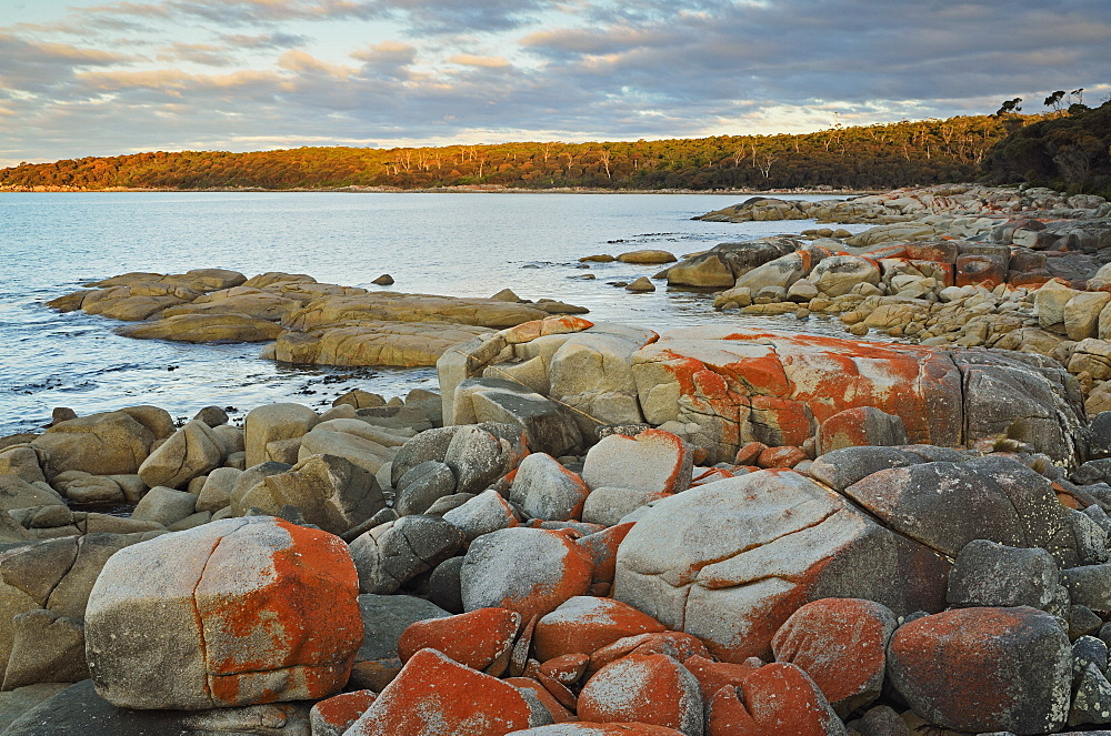 Red lichen on Rocks, Bay of Fires, Bay of Fires Conservation Area, Tasmania, Australia, Pacific