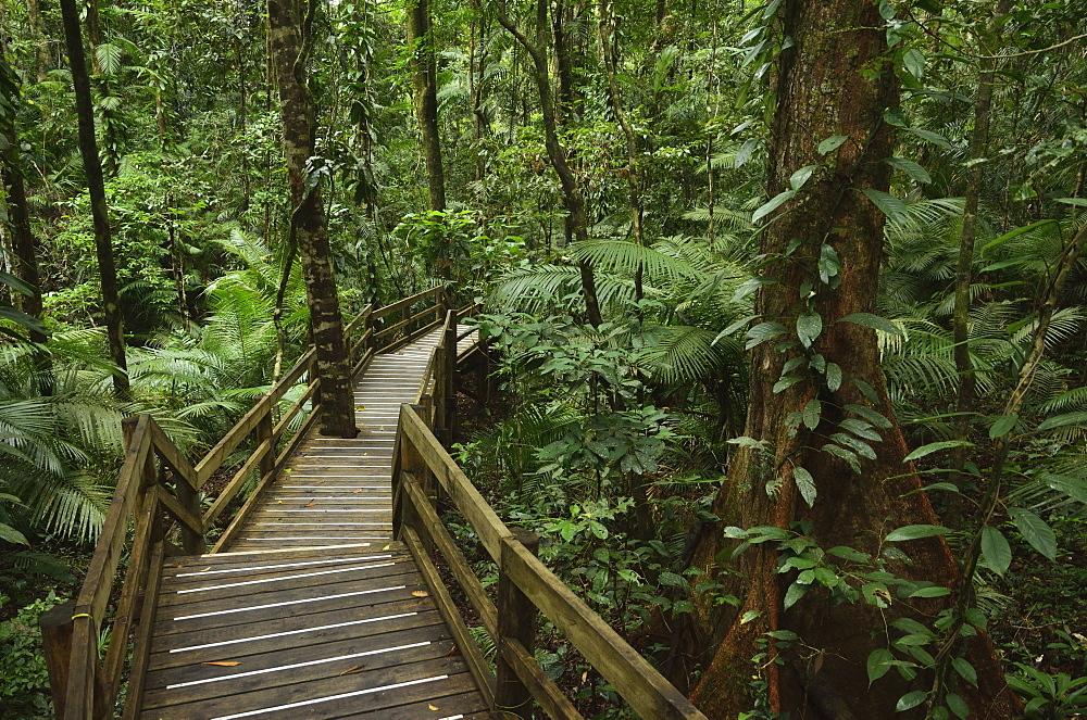 Boardwalk through rainforest, Daintree National Park, UNESCO World Heritage Site, Queensland, Australia, Pacific - 756-2060