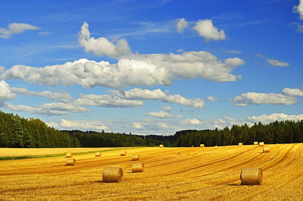 Rural scene, near Villingen-Schwenningen, Black Forest, Schwarzwald-Baar, Baden-Wurttemberg, Germany, Europe
