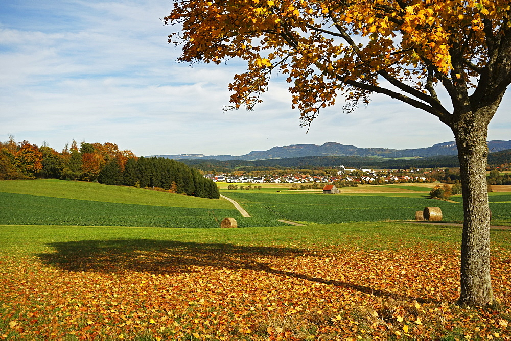 Rural autumn scene with Lauffen village, near Villingen-Schwenningen, Black Forest, Schwarzwald-Baar, Baden-Wurttemberg, Germany, Europe