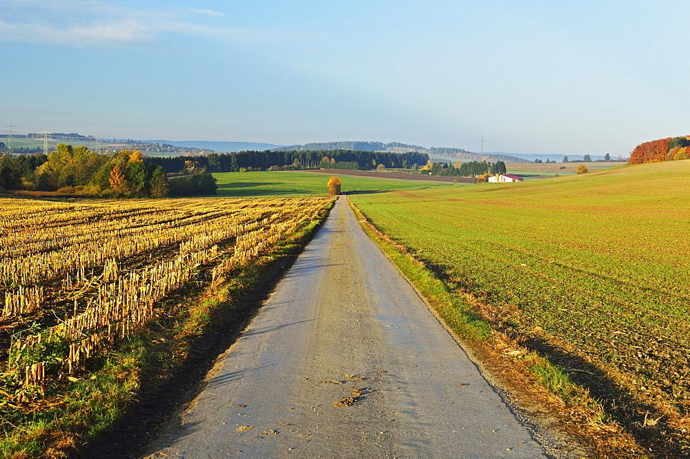 Country road, near Villingen-Schwenningen, Black Forest, Schwarzwald-Baar, Baden-Wurttemberg, Germany, Europe