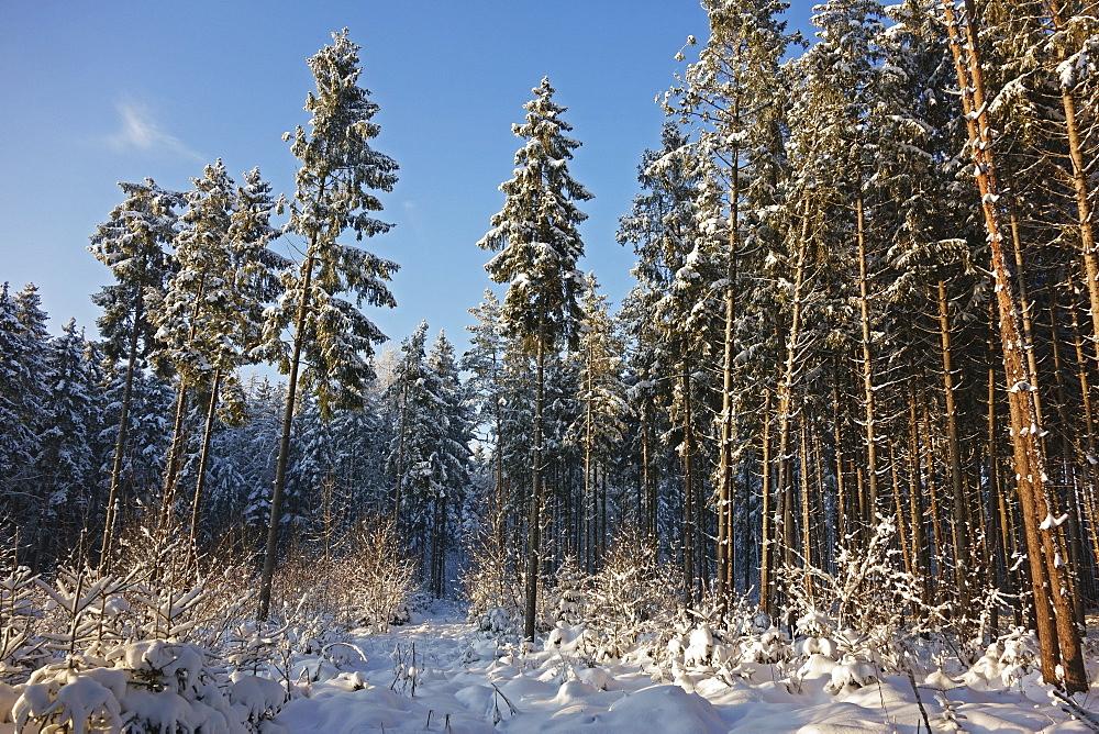 Black Forest in winter, near Villingen-Schwenningen, Schwarzwald-Baar, Baden-Wurttemberg, Germany, Europe