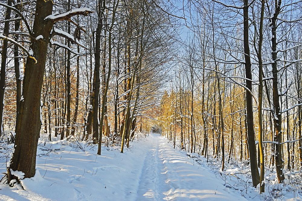 Rural winter scene, near Villingen-Schwenningen, Schwarzwald-Baar, Baden-Wurttemberg, Germany, Europe