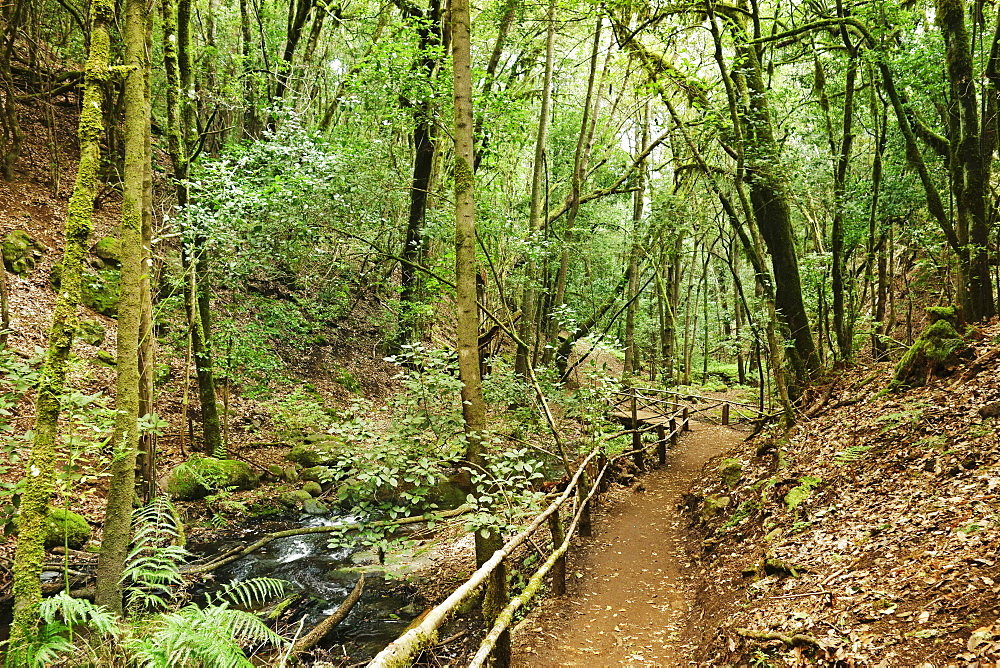 Laurel forest, Parque Nacional de Garajonay, UNESCO World Heritage Site, La Gomera, Canary Islands, Spain, Europe - 756-2809