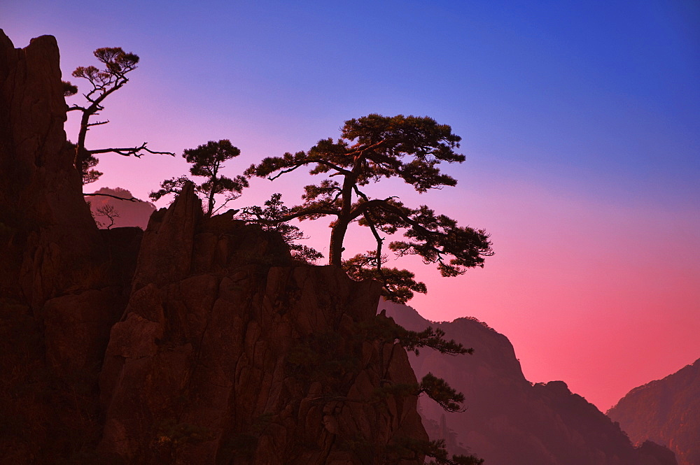 Pine trees, White Cloud scenic area, Huang Shan (Mount Huangshan) (Yellow Mountain), UNESCO World Heritage Site, Anhui Province, China, Asia