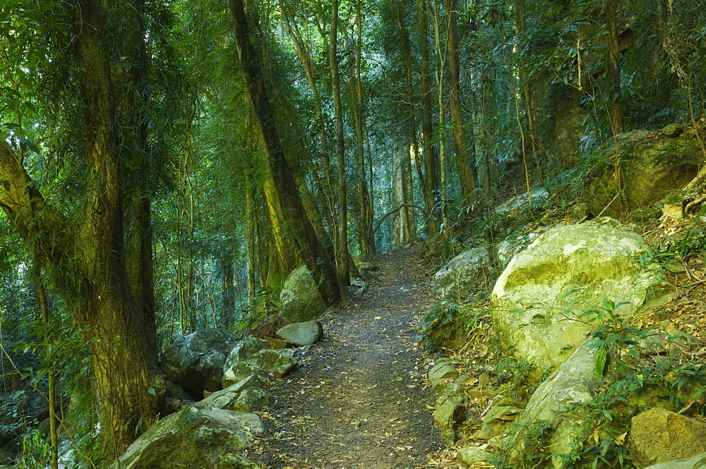 Walking track through Dorrigo National Park, UNESCO World Heritage Site, New South Wales, Australia, Pacific