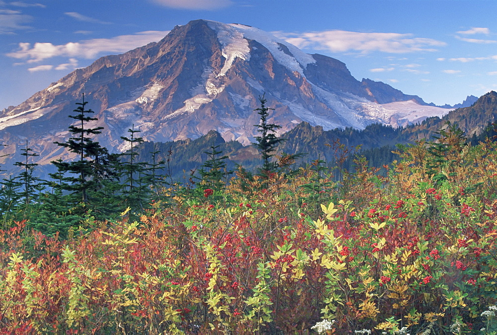 Landscape, Mount Rainier National Park, Washington state, United States of America, North America - 757-1
