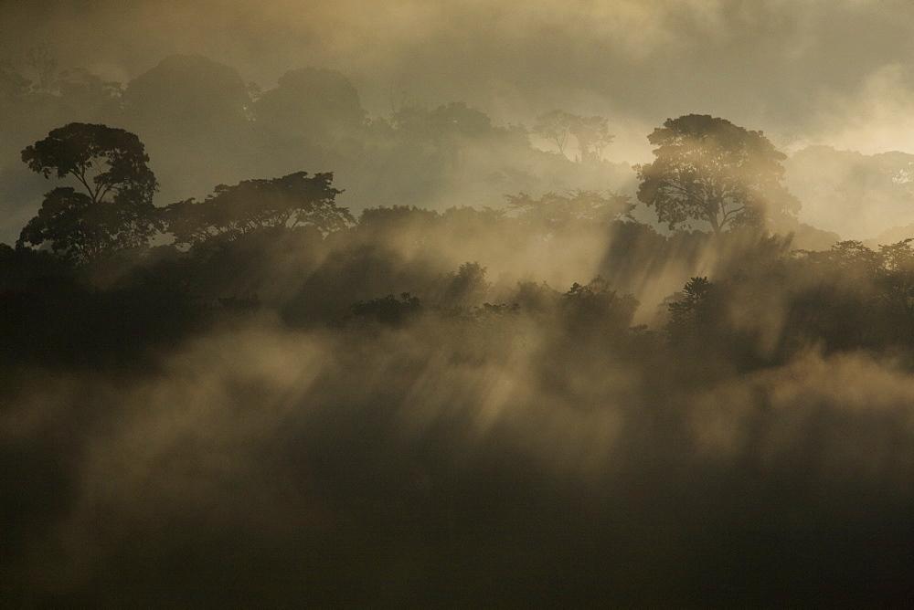 Rising rainforest mist, Peru, South America - 757-225