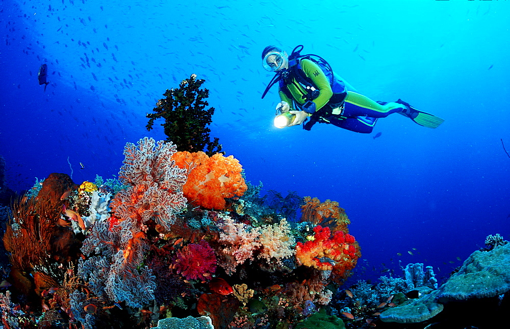 Scuba diver and coral reef, Indonesia, Indian Ocean, Komodo National Park - 759-1067