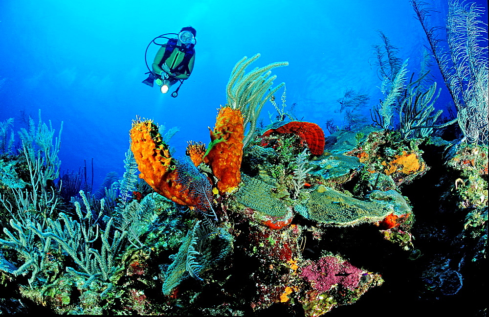 Caribbean reef and scuba diver, Bahamas, Caribbean Sea, Grand Bahama