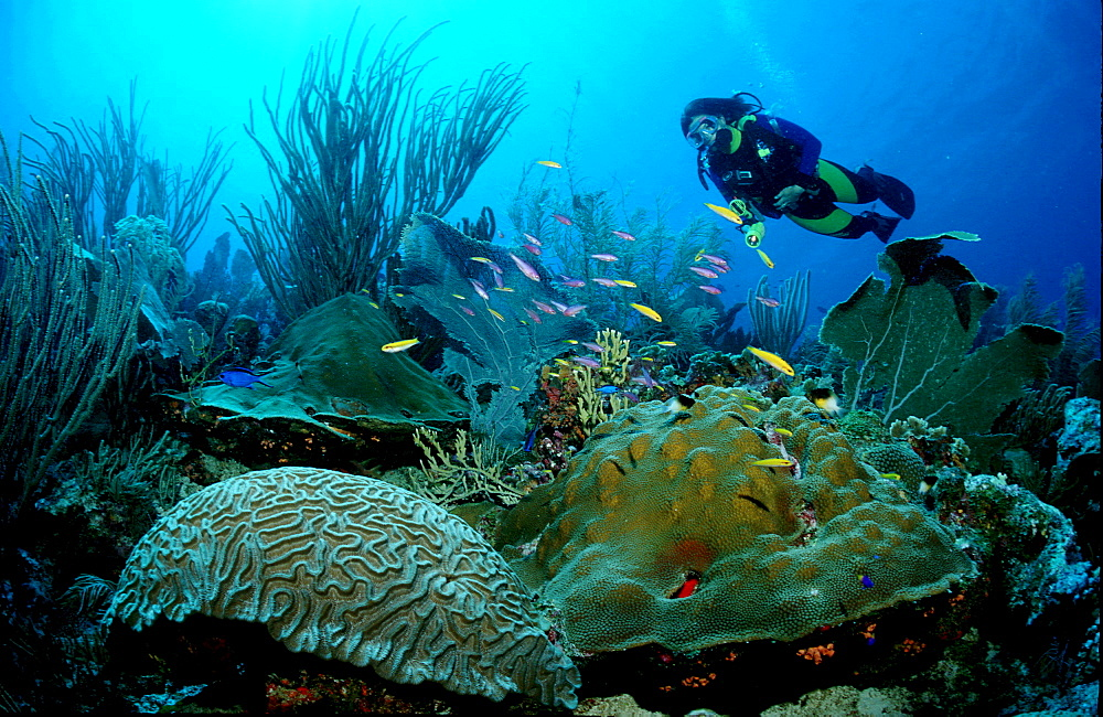 Caribbean reef and scuba diver, Bonaire, Caribbean Sea