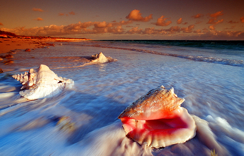 Conch, Bahamas, Caribbean Sea, Cat Island - 759-2115