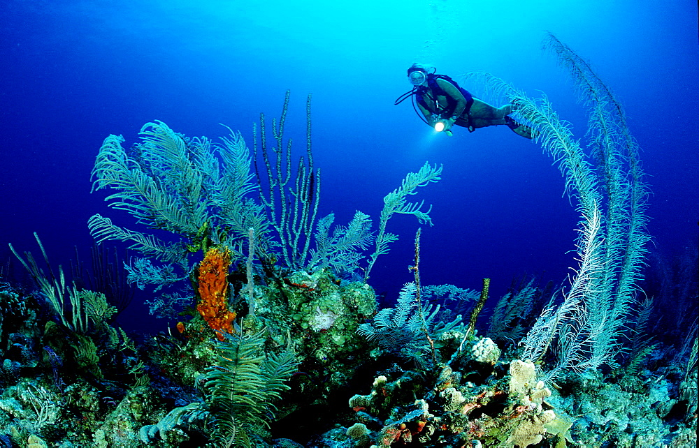 Caribbean coral reef and scuba diver,