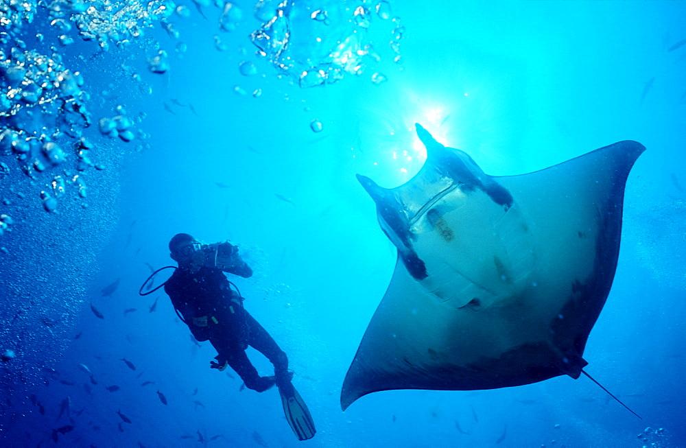 Sicklefin devilray and Scuba Diver, Mobula tarapacana, Costa Rica, Cocos Island, South america, Latin america - 759-3240