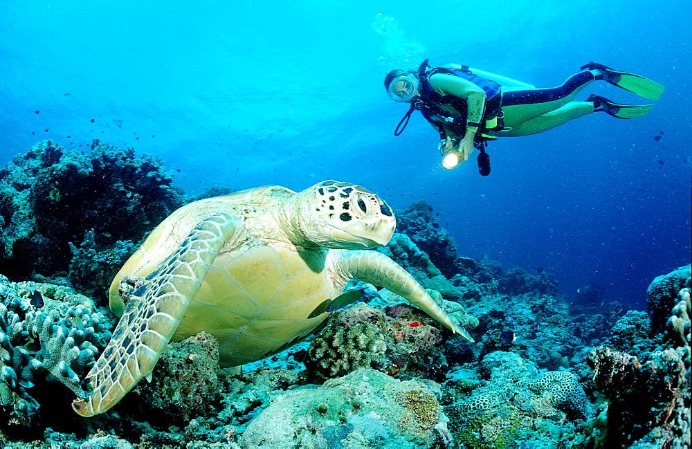 Green Turtle and scuba diver, Chelonia mydas, Malaysia, Pazifik, Pacific ocean, Borneo, Mabul