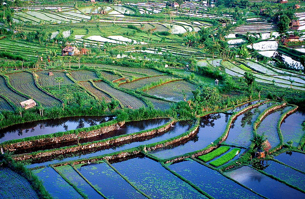 rice field, aerial view, Indonesia, Indian Ocean, Bali