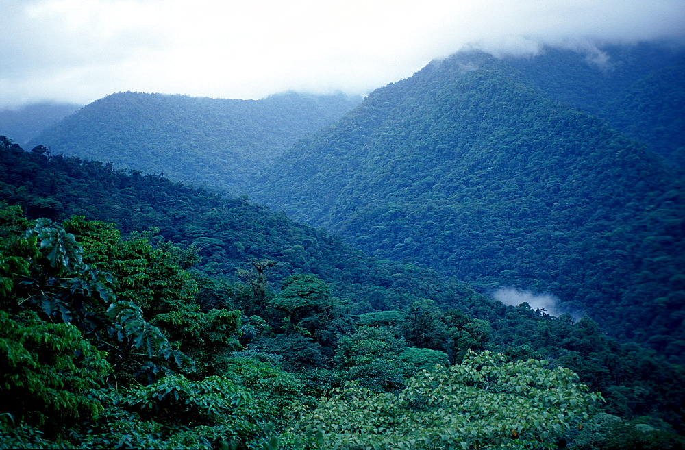 Rainforest, Highland rainforest, Costa Rica, Mulu National Park
