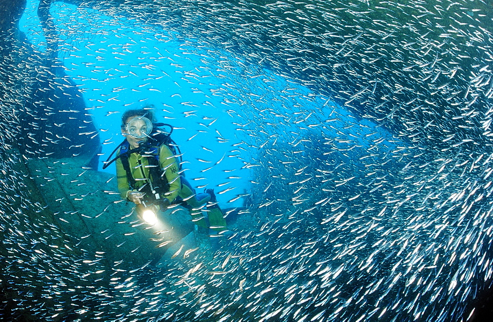 Scuba diver in ship wreck Patricia and sweeper fish (Parapriacanthus ransonneti), Punta Cana, Dominican Republic, Caribbean, Central America - 759-4560