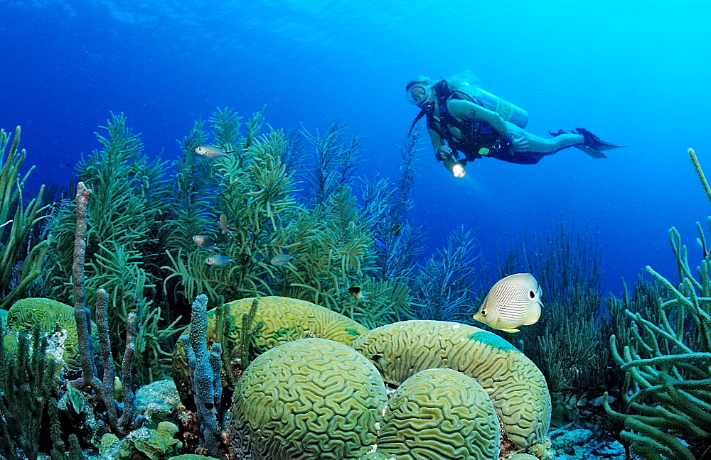 Scuba diver and Foureye Butterflyfish, Chaetodon capistratus, Netherlands Antilles, Bonaire, Caribbean Sea