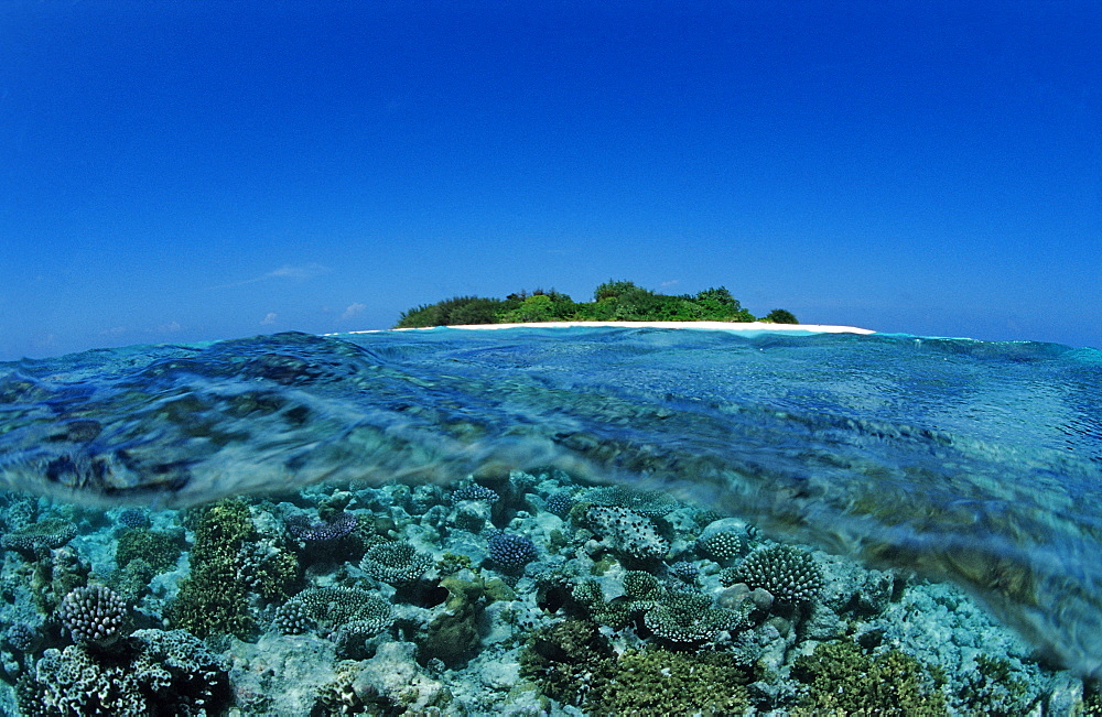 Corals close to Maldive Island, Maldives, Indian Ocean, Meemu Atoll