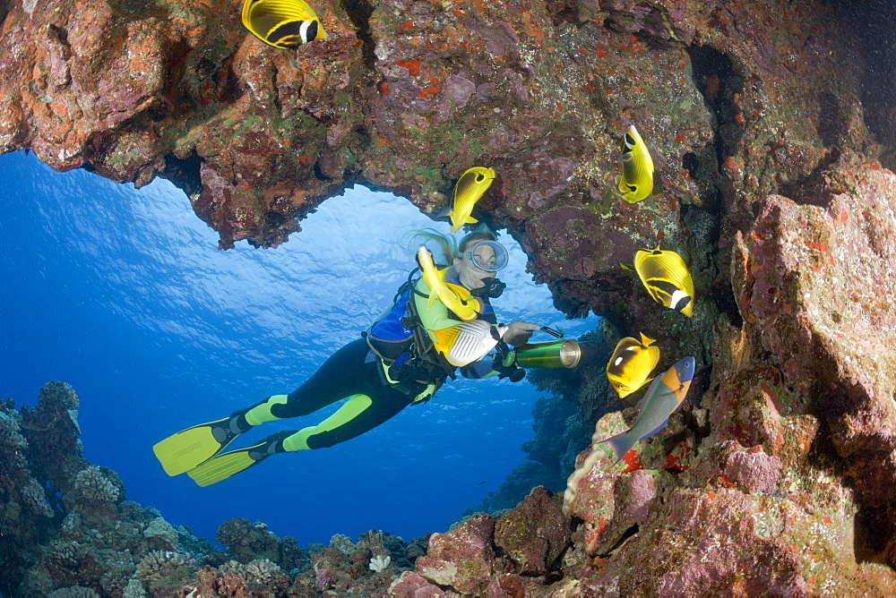 Racoon-Butterflyfishes and Diver, Chaetodon lunula, Cathedrals of Lanai, Maui, Hawaii, USA