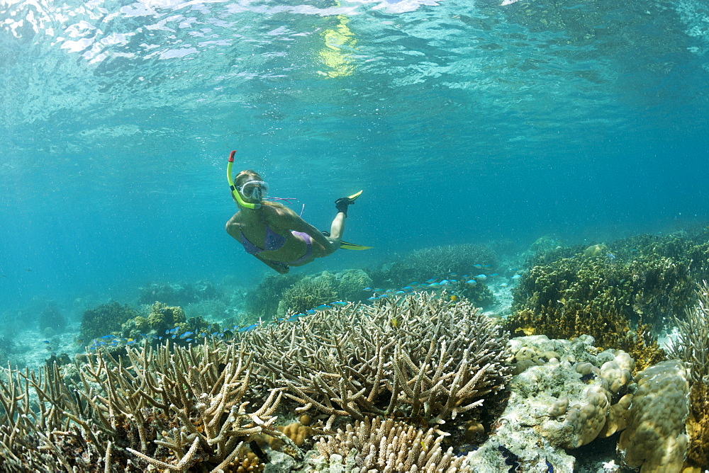 Snorkeling at shallow Coral Reef, Micronesia, Palau