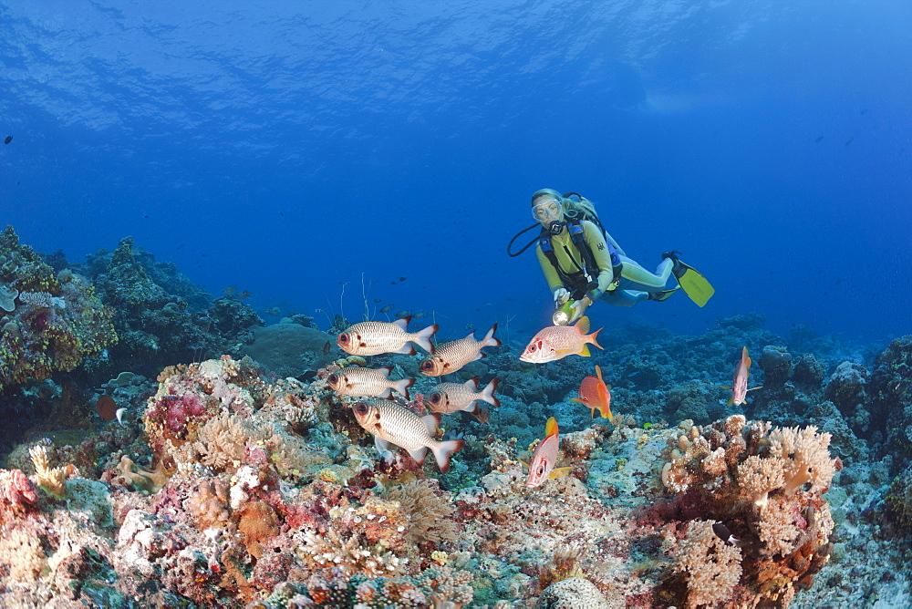 Diver and Bronze Soldierfishes and Squirrelfishes, Myripristis adusta, Sargocentron spiniferum, Blue Corner, Micronesia, Palau