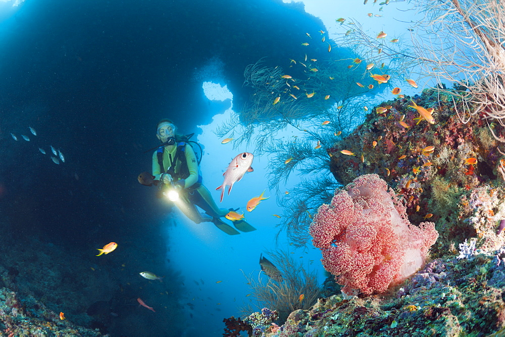 Diver and Red Soft Coral, Dendronephthya mucronata, Maya Thila, North Ari Atoll, Maldives