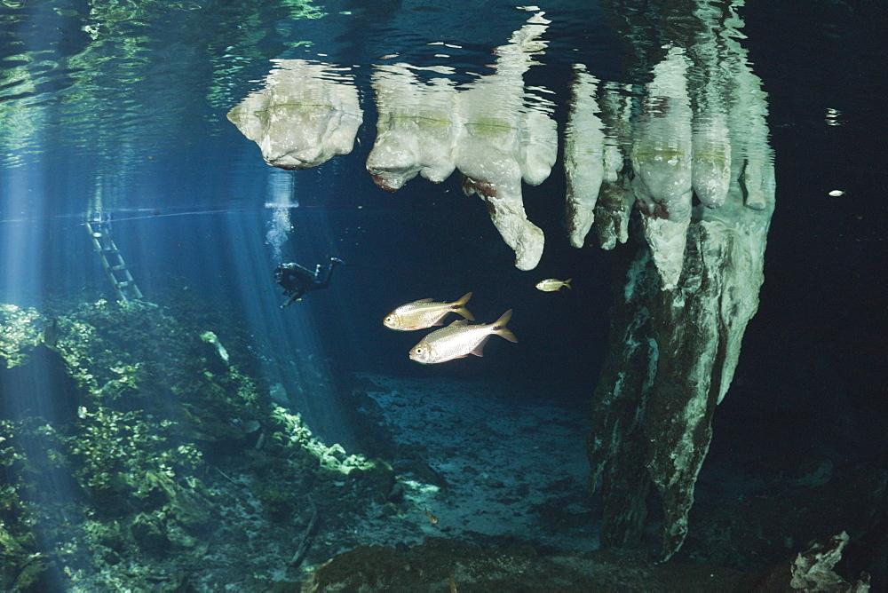 Stalactites in Gran Cenote, Tulum, Yucatan Peninsula, Mexico