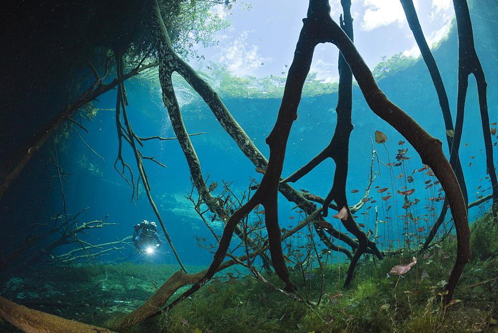 Scuba Diver in Car Wash Cenote Aktun Ha, Tulum, Yucatan Peninsula, Mexico