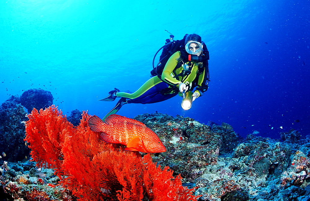 Coral grouper and scuba diver, Rebreather, Cephalopholis miniata, Maldives Island, Indian Ocean, Ari Atol - 759-873