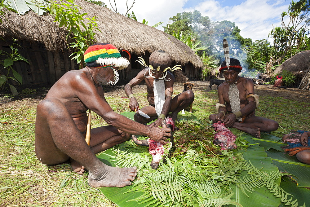 Dani men cutting up cooked pig at Pig Festival, Baliem Valley, West Papua, Indonesia, Southeast Asia, Asia - 759-9307