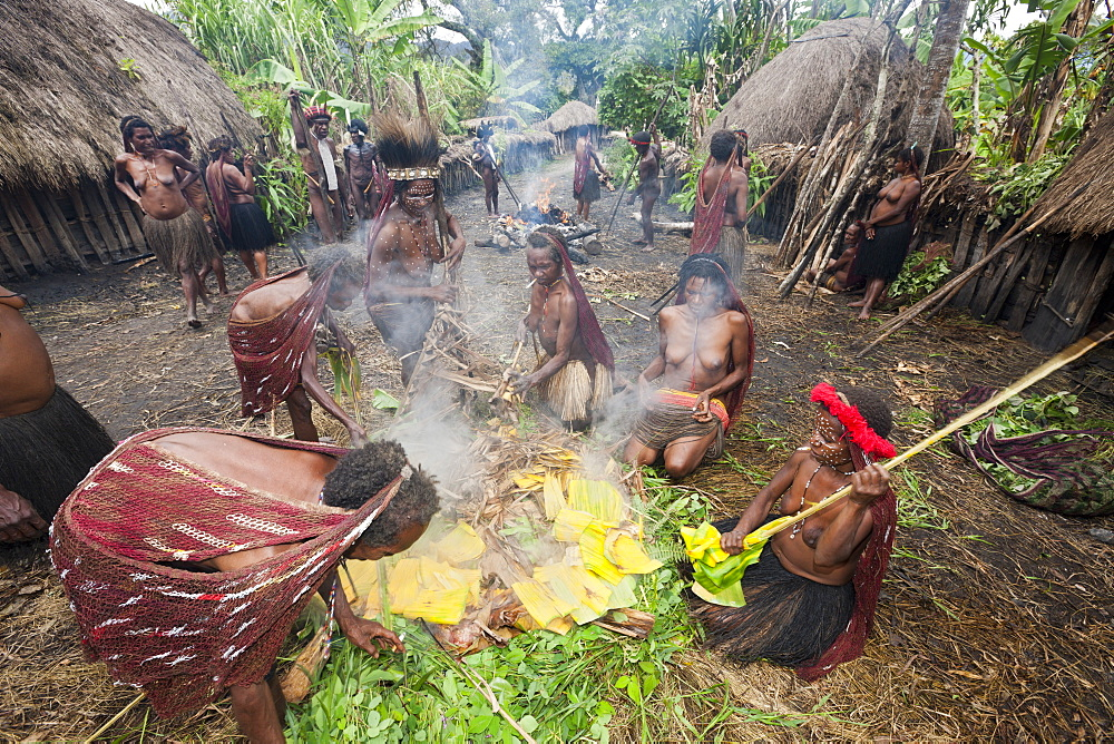 Dani Tribe preparing earth oven, Baliem Valley, West Papua, Indonesia, Southeast Asia, Asia - 759-9324