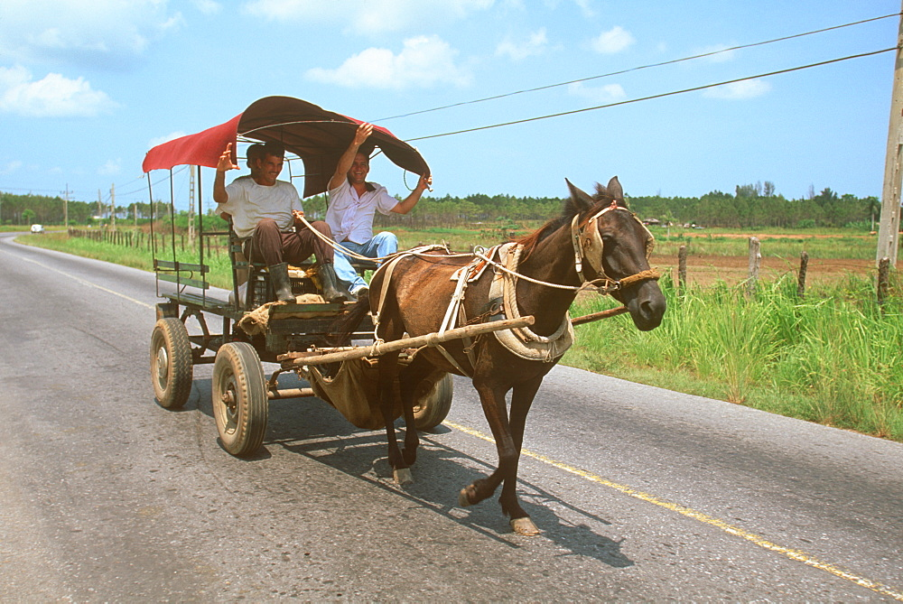 Rural horse drawn carriage, similar carriages are often used because of lack of gasoline, Isle of youth, Cuba