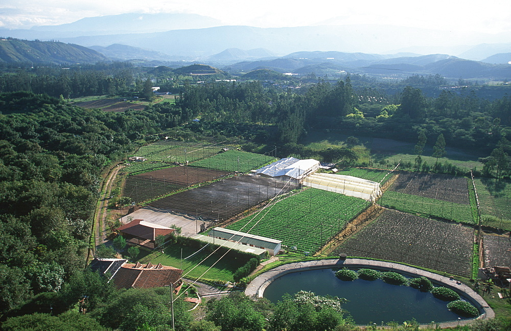 Commercial farm producing flowers and roses for export worldwide, south of Otavalo a hugh agricultural industry in Ecuador, North of Quito, Highlands, Ecuador