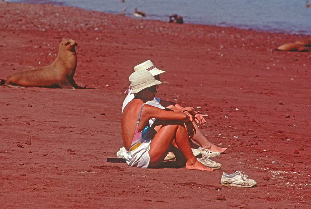 Rabida Island, tourists sitting quietly near Sea Lions to demonstrate how unafraid the animals are during an ecotourism trip, Galapagos Islands, Ecuador