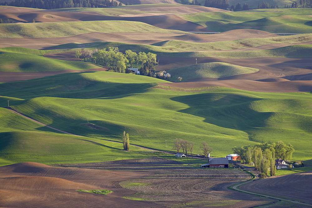 Rolling hills, The Palouse, Whitman County, Washington State, United States of America, North America