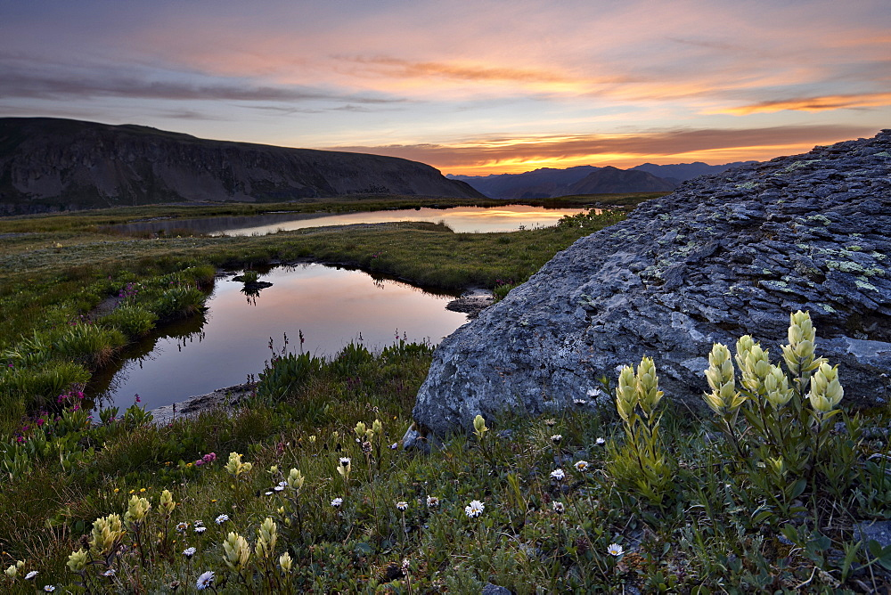 Sulphur Paintbrush and Alpine tarns at dawn, San Juan National Forest, Colorado, United States of America, North America