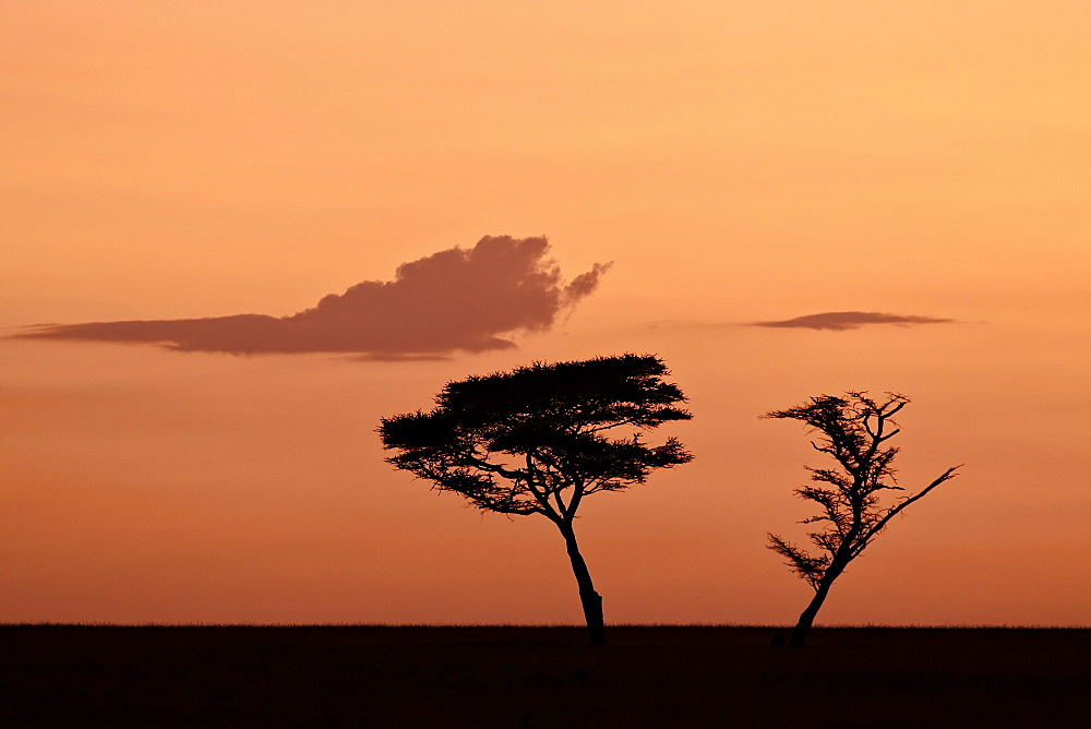 Two acacia trees at dawn, Serengeti National Park, UNESCO World Heritage Site, Tanzania, East Africa, Africa