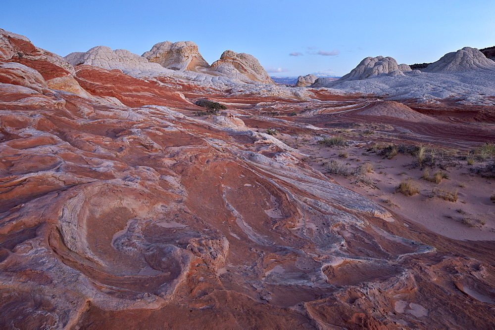 Red and white sandstone swirls at dawn, White Pocket, Vermilion Cliffs National Monument, Arizona, United States of America, North America