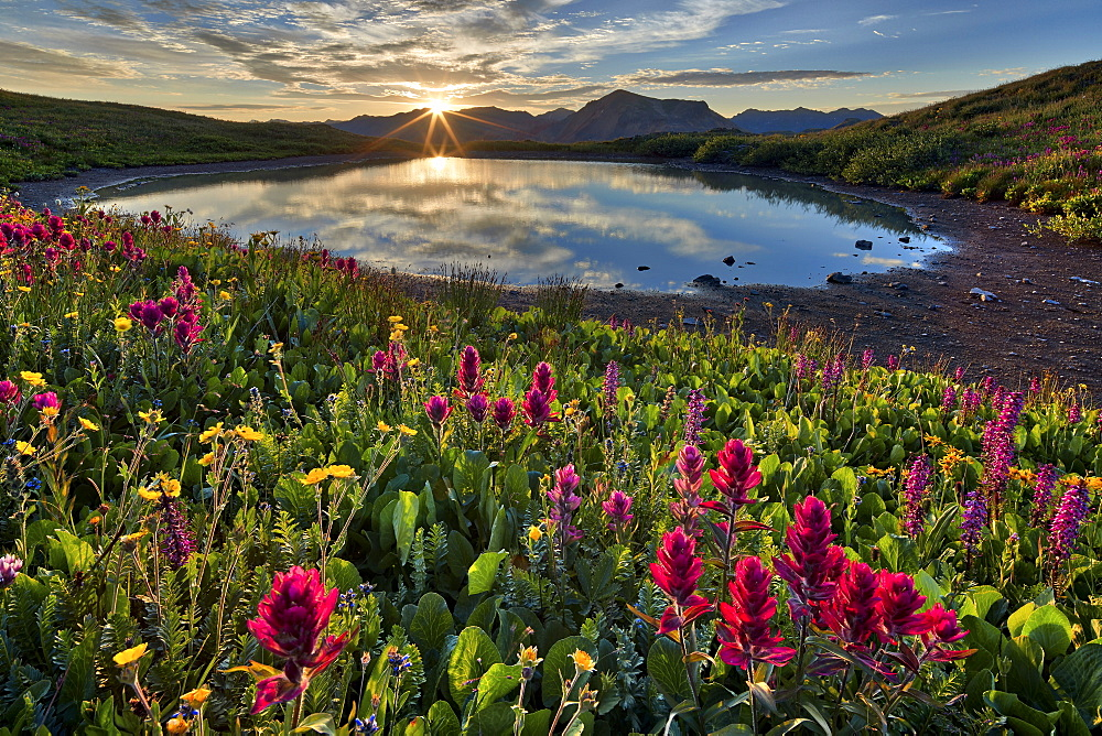 Sunrise over Alpine wildflowers, San Juan National Forest, Colorado, United States of America, North America